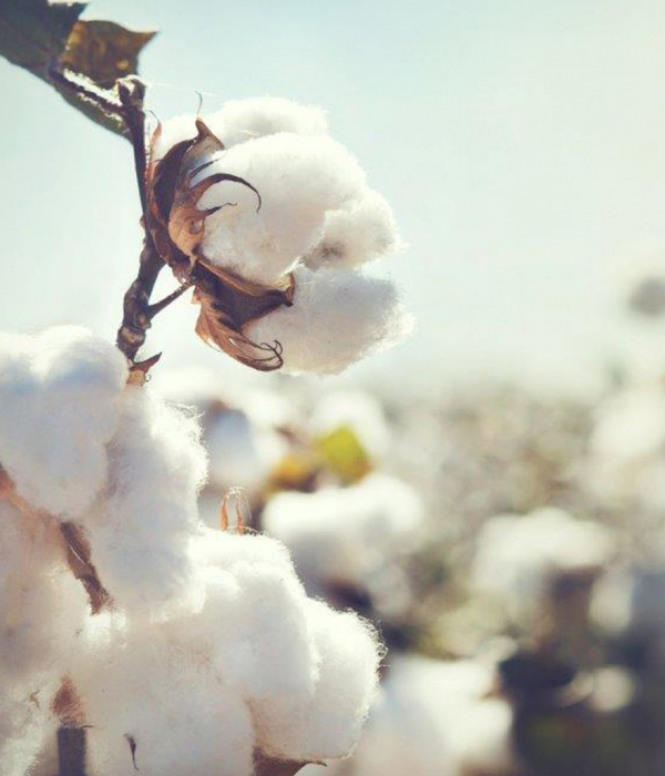Benefits of Pima Cotton